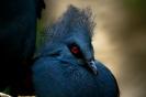 Blue Bird_1
